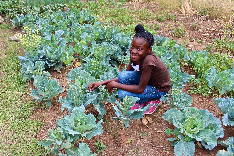 Un bambino africano di un villaggio dei bambini SOS seduto in un orto mentre si occupa dell'insalata.